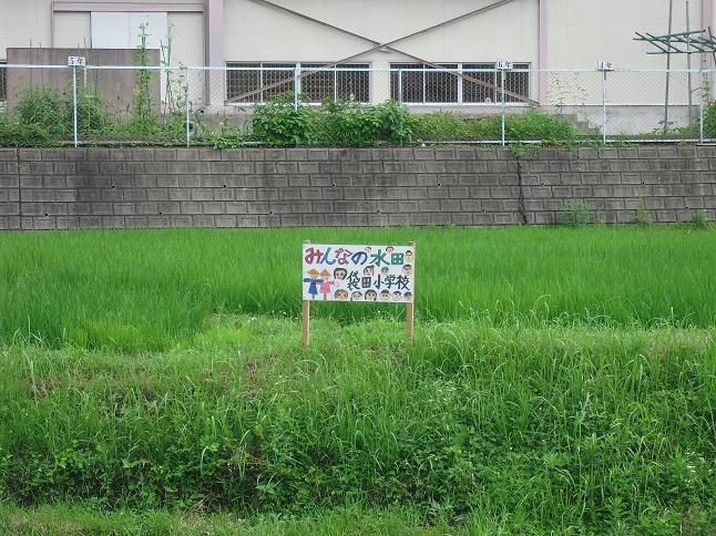 tanbo1.jpg