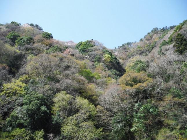 washinosu.jpg